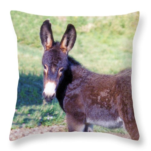 Animals Throw Pillow featuring the photograph Baby Jenny by Jan Amiss Photography