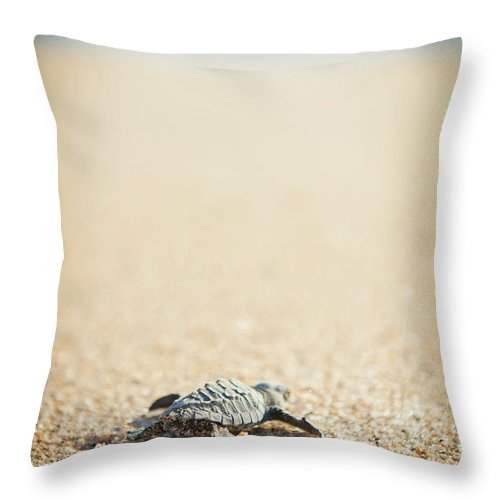 Shadow Throw Pillow featuring the photograph Baby Pacific Green Sea Turtle Heads For by Stephen Simpson