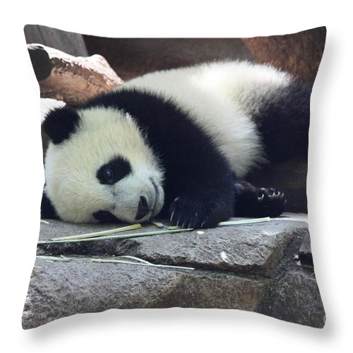 Baby Panda Throw Pillow featuring the photograph Baby Panda by John Telfer
