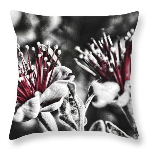 Pohutakwa Throw Pillow featuring the photograph Baby Pohutakawa by Karen Lewis