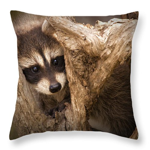 Raccoon Throw Pillow featuring the photograph Baby Raccoon by Sharon Ely