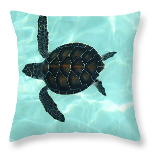 Baby Sea Turtle Throw Pillow featuring the photograph Baby Sea Turtle by Ellen Henneke