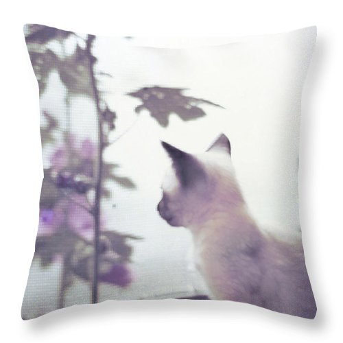 Siamese Throw Pillow featuring the photograph Baby Siamese Kitten by Lynn Hansen