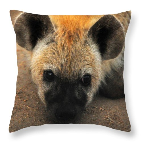 Carnivore Throw Pillow featuring the photograph Baby Spotted Hyena by Daniela White