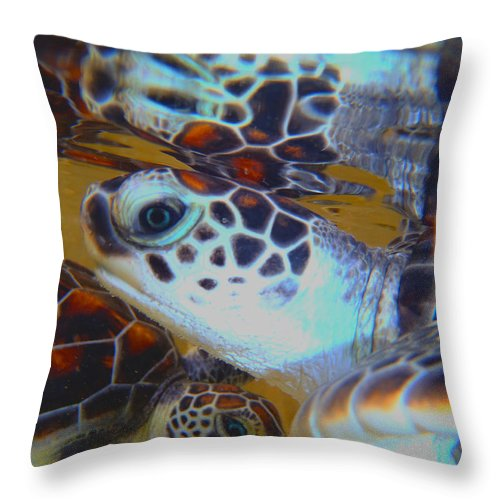 Turtle Throw Pillow featuring the photograph Baby Turtles by Carey Chen