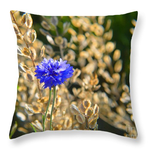 Bachelor's Button Throw Pillow featuring the photograph Bachelor's Button 2014 by Tina M Wenger