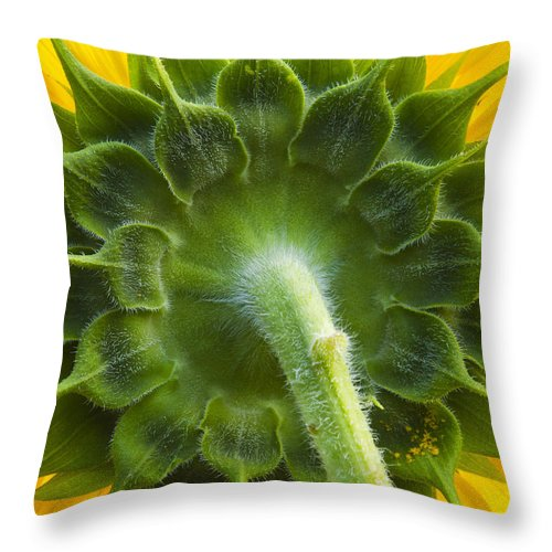 Nature Throw Pillow featuring the photograph Back Of Sunflower by Sharon M Connolly