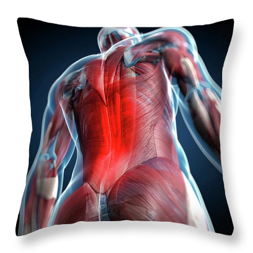 Physiology Throw Pillow featuring the digital art Back Pain, Conceptual Artwork by Science Photo Library - Sciepro