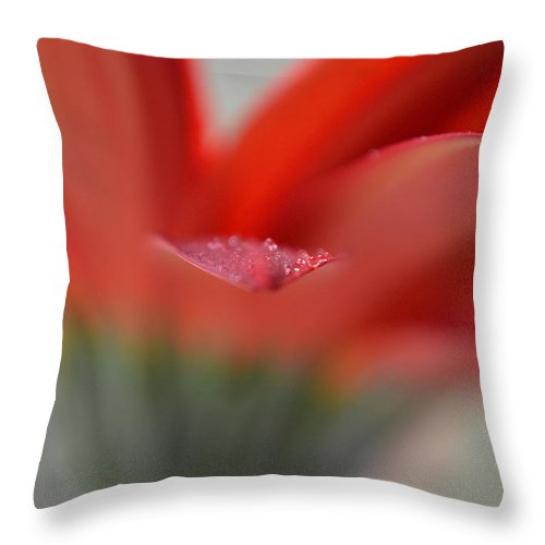 Flower Throw Pillow featuring the photograph Back To Life by Melanie Moraga