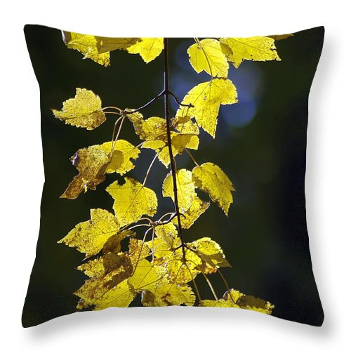 2d Throw Pillow featuring the photograph Backlit Leaves Of Autumn by Brian Wallace