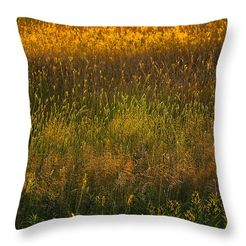 Backlit Meadow Grasses Throw Pillow featuring the photograph Backlit Meadow Grasses by Marty Saccone