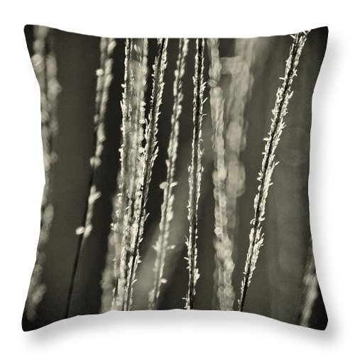 North America Throw Pillow featuring the photograph Backlit Sepia Toned Wild Grasses In Black And White by Dave Welling