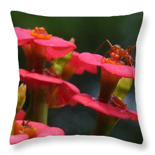 Flowers Throw Pillow featuring the photograph Backyard Beauties by Douglas Stucky