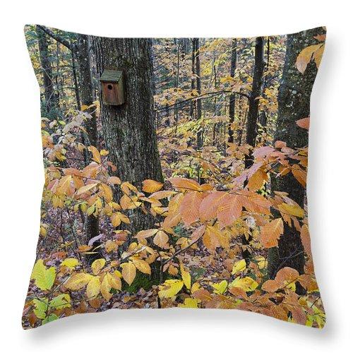 Fall Throw Pillow featuring the photograph Backyard Birdhouse by Alan L Graham
