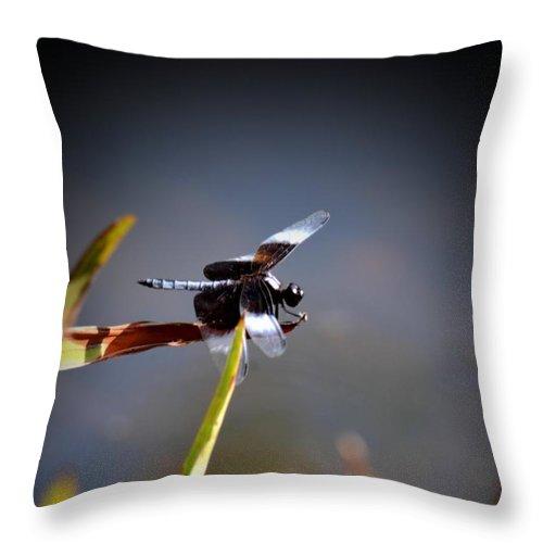 Balancing Throw Pillow featuring the photograph Balancing Beam by Maria Urso