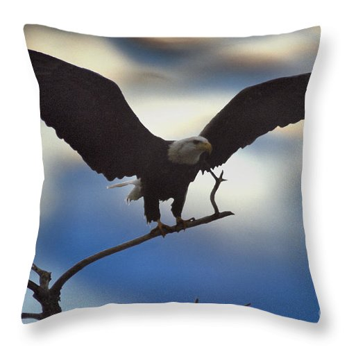 Bald Eagle Throw Pillow featuring the photograph Bald Eagle And Clouds by Sharon Elliott