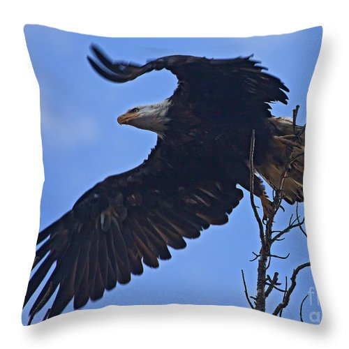 Bird Throw Pillow featuring the photograph Bald Eagle At Take Off  #6109 by J L Woody Wooden