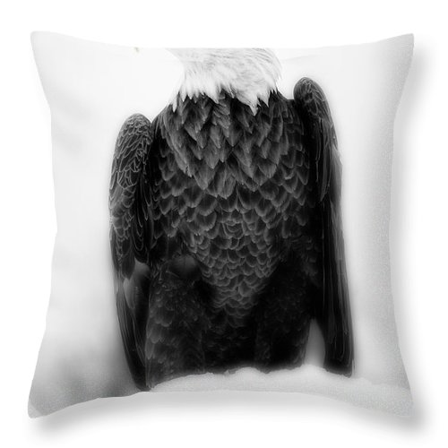Bald Eagle Photography Throw Pillow featuring the photograph Bald Eagle II by Todd Bielby