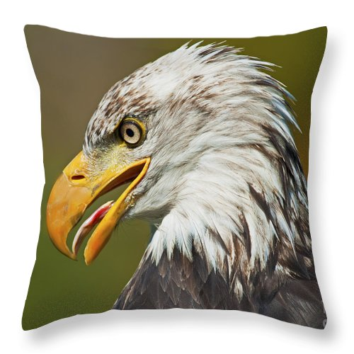 Nina Stavlund Throw Pillow featuring the photograph Bald Eagle... by Nina Stavlund