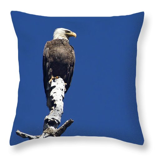 Bird Throw Pillow featuring the photograph Bald Eagle On A Perch  #2698 by J L Woody Wooden