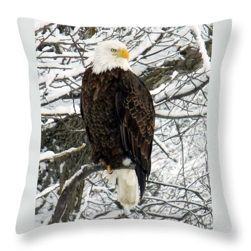 Bald Eagle Throw Pillow featuring the photograph Bald Eagle by Penny Meyers