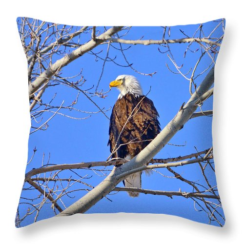 Bald Eagle Throw Pillow featuring the photograph Bald Eagle Perched by Greg Norrell