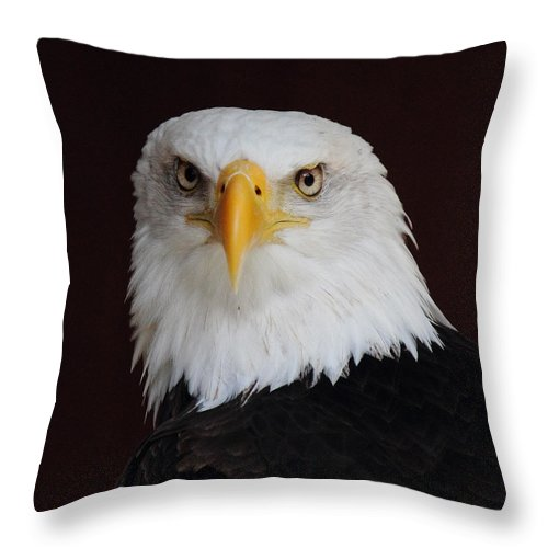 Bald Eagle Throw Pillow featuring the photograph Bald Eagle Portrait by Randy Hall