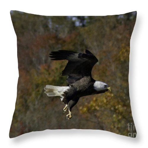 Birds Throw Pillow featuring the photograph Bald Eagle by Regina Worrell