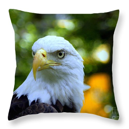 Bald Throw Pillow featuring the photograph Bald Eagle by Terri Mills