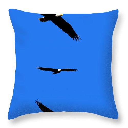 Eagle Throw Pillow featuring the photograph Bald Eagle Triptych by Thomas Marchessault