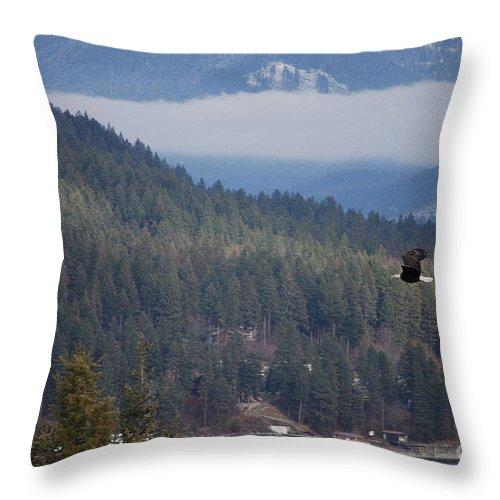 Bald Eagle Throw Pillow featuring the photograph Bald Eagle V I I by Sharon Elliott