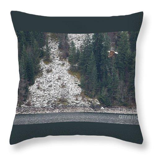 Bald Eagle Throw Pillow featuring the photograph Bald Eagle V by Sharon Elliott