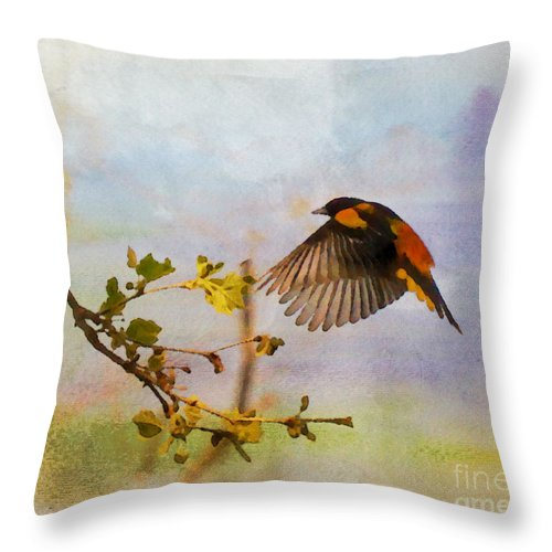 Baltimore Oriole Throw Pillow featuring the photograph Baltimore Oriole Arrival by Kerri Farley