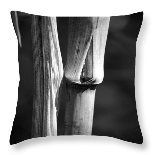 Bamboo Throw Pillow featuring the photograph Bamboo Cane by Nathan Abbott