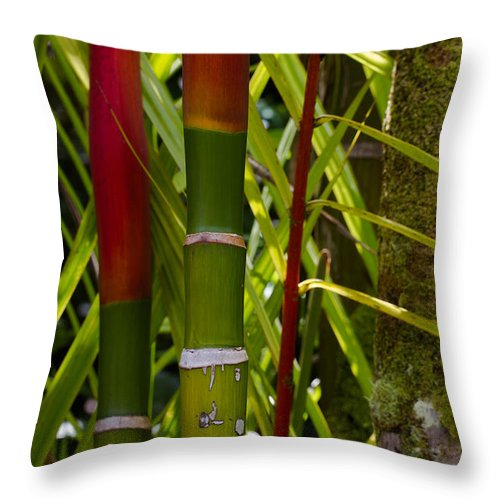 Bamboo Throw Pillow featuring the photograph Bamboo Too All Profits Go To Hospice Of The Calumet Area by Joanne Markiewicz