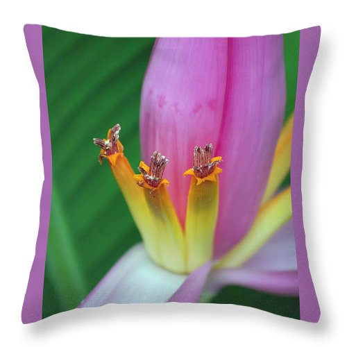 Banana Throw Pillow featuring the photograph Banana Blossom by Charlotte Schafer