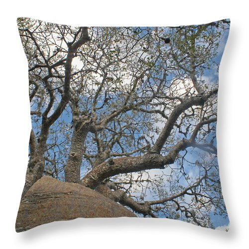 Africa Throw Pillow featuring the photograph baobab from Madagascar 9 by Rudi Prott