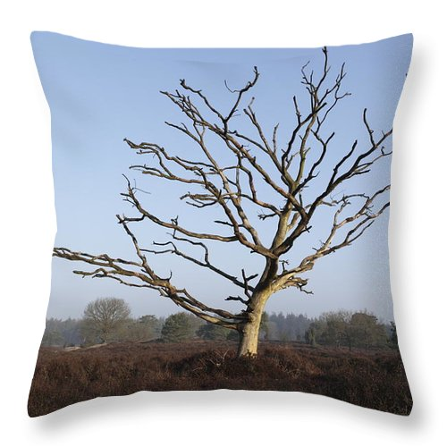 Tree Throw Pillow featuring the photograph Bare Tree In Forest by Ronald Jansen