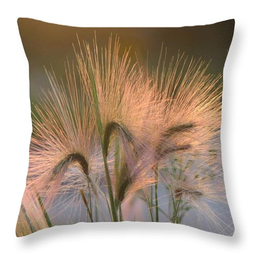 Pasture Throw Pillow featuring the painting Barley by Sharon Duguay