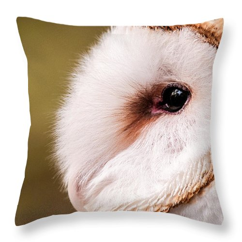 Owl Throw Pillow featuring the photograph Barn Owl Profile by Don Johnson