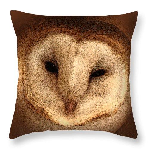 Barn Owl Throw Pillow featuring the photograph Barn Owl by TnBackroadsPhotos