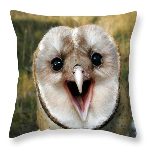 Fauna Throw Pillow featuring the photograph Barn Owl Tyto Alba by Kenneth M Highfill