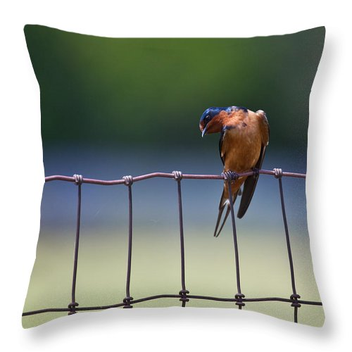 Bird Throw Pillow featuring the photograph Barn Swallow by Mark Alder