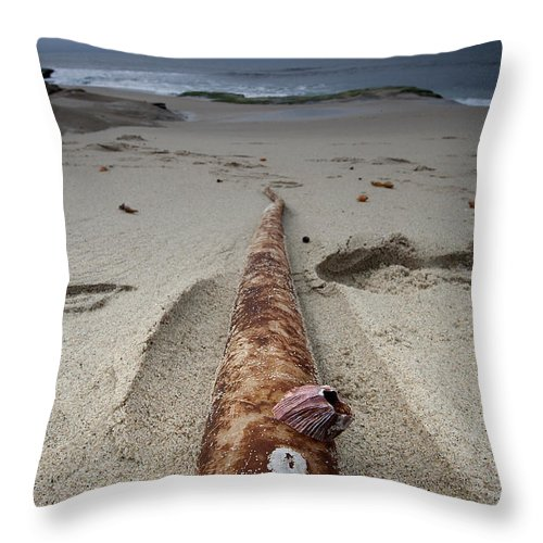 Beach Throw Pillow featuring the photograph Barnacle Tales by Peter Tellone