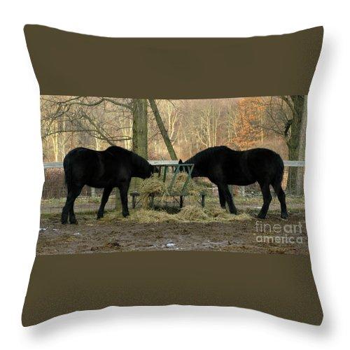 Horse Throw Pillow featuring the photograph Barnyard Beauties by Ann Horn