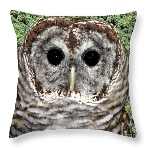 Barred Owl Throw Pillow featuring the photograph Barred Owl 1 by Rose Santuci-Sofranko