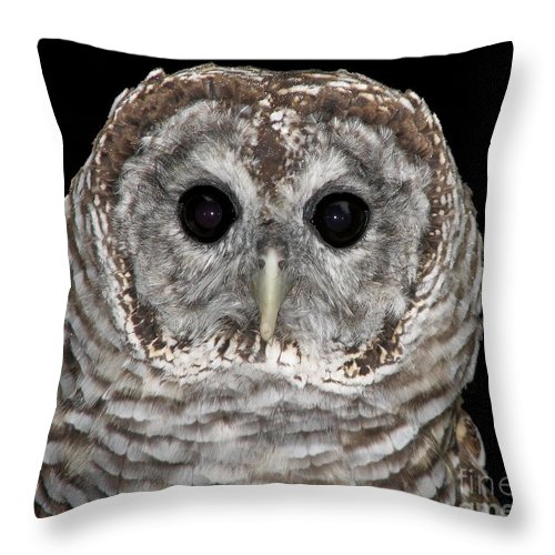 Barred Owl Throw Pillow featuring the photograph Barred Owl 3 by Rose Santuci-Sofranko