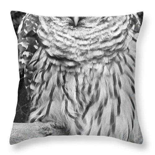 Barred Owl In Black And White Throw Pillow featuring the photograph Barred Owl In Black And White by John Telfer