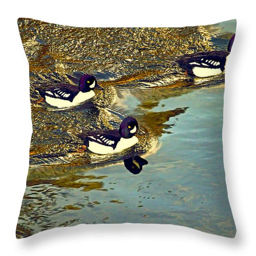 Goldeneyes Throw Pillow featuring the photograph Barrow's Goldeneyes Going For The Gold by Peggy Collins