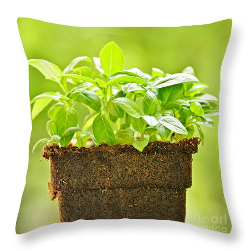 Basil Throw Pillow featuring the photograph Basil by Elena Elisseeva